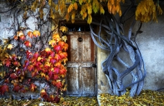 Осенняя акварельная композиция