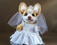 Тедди собака Аманда.