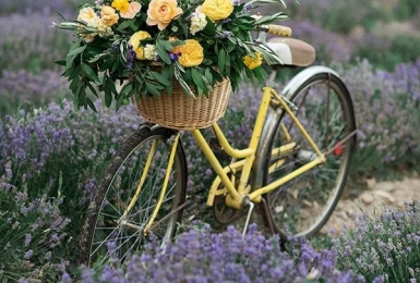 Цветочный сюжет с велосипедом