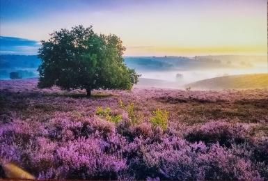 Пейзаж с лавандовым полем