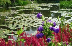 Пруд в водном саду К.Моне
