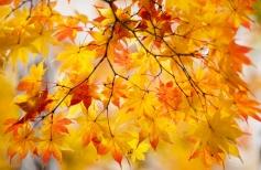 Листья жёлтые над городом кружатся