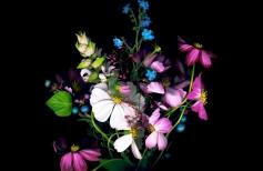 Самый сказочный и небывалый, самый волшебный цветок