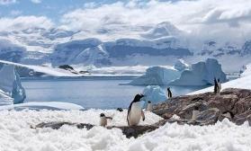 Пейзаж с пингвином