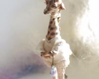 Серия Nature. Жираф. Девочка Ифе