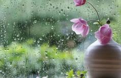 Натюрморт за мокрым стеклом с розовыми цветами