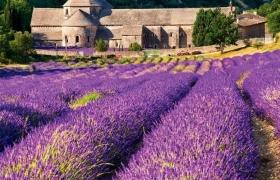 Французский замок на лавандовом поле
