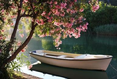 Пейзаж с лодкой и цветущим деревом