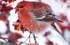Зимняя птичка